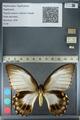 http://mczbase.mcz.harvard.edu/specimen_images/ent-lepidoptera/images/2012_10_26/IMG_133267.JPG