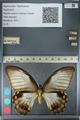 http://mczbase.mcz.harvard.edu/specimen_images/ent-lepidoptera/images/2012_10_26/IMG_133268.JPG
