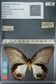 http://mczbase.mcz.harvard.edu/specimen_images/ent-lepidoptera/images/2012_10_26/IMG_133269.JPG