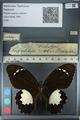 http://mczbase.mcz.harvard.edu/specimen_images/ent-lepidoptera/images/2012_10_26/IMG_133274.JPG