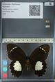 http://mczbase.mcz.harvard.edu/specimen_images/ent-lepidoptera/images/2012_10_26/IMG_133275.JPG