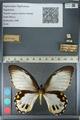 http://mczbase.mcz.harvard.edu/specimen_images/ent-lepidoptera/images/2012_10_26/IMG_133277.JPG