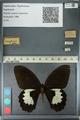 http://mczbase.mcz.harvard.edu/specimen_images/ent-lepidoptera/images/2012_10_27/IMG_133278.JPG