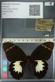 http://mczbase.mcz.harvard.edu/specimen_images/ent-lepidoptera/images/2012_10_27/IMG_133280.JPG