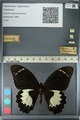 http://mczbase.mcz.harvard.edu/specimen_images/ent-lepidoptera/images/2012_10_27/IMG_133281.JPG