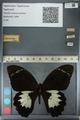 http://mczbase.mcz.harvard.edu/specimen_images/ent-lepidoptera/images/2012_10_27/IMG_133282.JPG