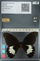 http://mczbase.mcz.harvard.edu/specimen_images/ent-lepidoptera/images/2012_10_27/IMG_133285.JPG
