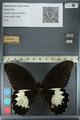 http://mczbase.mcz.harvard.edu/specimen_images/ent-lepidoptera/images/2012_10_27/IMG_133286.JPG
