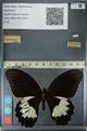 http://mczbase.mcz.harvard.edu/specimen_images/ent-lepidoptera/images/2012_10_27/IMG_133289.JPG