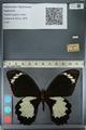 http://mczbase.mcz.harvard.edu/specimen_images/ent-lepidoptera/images/2012_10_27/IMG_133292.JPG