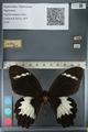 http://mczbase.mcz.harvard.edu/specimen_images/ent-lepidoptera/images/2012_10_27/IMG_133293.JPG