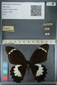 http://mczbase.mcz.harvard.edu/specimen_images/ent-lepidoptera/images/2012_10_27/IMG_133295.JPG