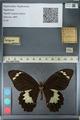 http://mczbase.mcz.harvard.edu/specimen_images/ent-lepidoptera/images/2012_10_27/IMG_133296.JPG