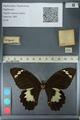 http://mczbase.mcz.harvard.edu/specimen_images/ent-lepidoptera/images/2012_10_27/IMG_133297.JPG