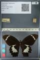 http://mczbase.mcz.harvard.edu/specimen_images/ent-lepidoptera/images/2012_10_27/IMG_133298.JPG