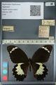 http://mczbase.mcz.harvard.edu/specimen_images/ent-lepidoptera/images/2012_10_27/IMG_133299.JPG
