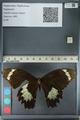 http://mczbase.mcz.harvard.edu/specimen_images/ent-lepidoptera/images/2012_10_27/IMG_133300.JPG