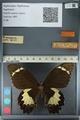 http://mczbase.mcz.harvard.edu/specimen_images/ent-lepidoptera/images/2012_10_27/IMG_133303.JPG
