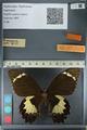 http://mczbase.mcz.harvard.edu/specimen_images/ent-lepidoptera/images/2012_10_27/IMG_133304.JPG