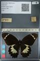 http://mczbase.mcz.harvard.edu/specimen_images/ent-lepidoptera/images/2012_10_27/IMG_133305.JPG