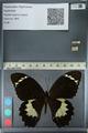 http://mczbase.mcz.harvard.edu/specimen_images/ent-lepidoptera/images/2012_10_27/IMG_133310.JPG