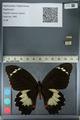 http://mczbase.mcz.harvard.edu/specimen_images/ent-lepidoptera/images/2012_10_27/IMG_133311.JPG