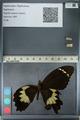 http://mczbase.mcz.harvard.edu/specimen_images/ent-lepidoptera/images/2012_10_27/IMG_133320.JPG