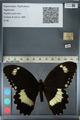 http://mczbase.mcz.harvard.edu/specimen_images/ent-lepidoptera/images/2012_10_27/IMG_133329.JPG