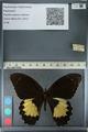 http://mczbase.mcz.harvard.edu/specimen_images/ent-lepidoptera/images/2012_10_27/IMG_133330.JPG