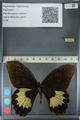 http://mczbase.mcz.harvard.edu/specimen_images/ent-lepidoptera/images/2012_10_27/IMG_133331.JPG