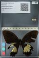 http://mczbase.mcz.harvard.edu/specimen_images/ent-lepidoptera/images/2012_10_27/IMG_133332.JPG
