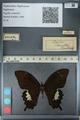 http://mczbase.mcz.harvard.edu/specimen_images/ent-lepidoptera/images/2012_10_27/IMG_133342.JPG