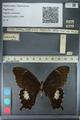 http://mczbase.mcz.harvard.edu/specimen_images/ent-lepidoptera/images/2012_10_27/IMG_133343.JPG