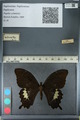 http://mczbase.mcz.harvard.edu/specimen_images/ent-lepidoptera/images/2012_10_27/IMG_133344.JPG