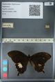 http://mczbase.mcz.harvard.edu/specimen_images/ent-lepidoptera/images/2012_10_27/IMG_133346.JPG