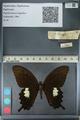 http://mczbase.mcz.harvard.edu/specimen_images/ent-lepidoptera/images/2012_10_27/IMG_133350.JPG