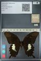http://mczbase.mcz.harvard.edu/specimen_images/ent-lepidoptera/images/2012_10_27/IMG_133352.JPG