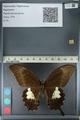 http://mczbase.mcz.harvard.edu/specimen_images/ent-lepidoptera/images/2012_10_27/IMG_133353.JPG