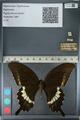 http://mczbase.mcz.harvard.edu/specimen_images/ent-lepidoptera/images/2012_10_27/IMG_133354.JPG