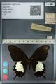 http://mczbase.mcz.harvard.edu/specimen_images/ent-lepidoptera/images/2012_10_27/IMG_133356.JPG