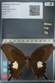 http://mczbase.mcz.harvard.edu/specimen_images/ent-lepidoptera/images/2012_10_27/IMG_133364.JPG