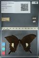 http://mczbase.mcz.harvard.edu/specimen_images/ent-lepidoptera/images/2012_10_27/IMG_133369.JPG