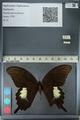 http://mczbase.mcz.harvard.edu/specimen_images/ent-lepidoptera/images/2012_10_27/IMG_133370.JPG