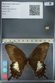 http://mczbase.mcz.harvard.edu/specimen_images/ent-lepidoptera/images/2012_10_27/IMG_133371.JPG