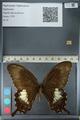 http://mczbase.mcz.harvard.edu/specimen_images/ent-lepidoptera/images/2012_10_27/IMG_133372.JPG