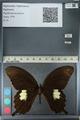 http://mczbase.mcz.harvard.edu/specimen_images/ent-lepidoptera/images/2012_10_27/IMG_133373.JPG
