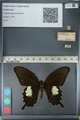 http://mczbase.mcz.harvard.edu/specimen_images/ent-lepidoptera/images/2012_10_27/IMG_133374.JPG