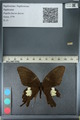 http://mczbase.mcz.harvard.edu/specimen_images/ent-lepidoptera/images/2012_10_27/IMG_133376.JPG