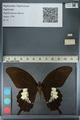 http://mczbase.mcz.harvard.edu/specimen_images/ent-lepidoptera/images/2012_10_27/IMG_133377.JPG