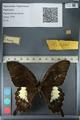 http://mczbase.mcz.harvard.edu/specimen_images/ent-lepidoptera/images/2012_10_27/IMG_133382.JPG